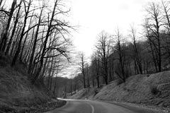 Route vide dans la forêt Image libre de droits