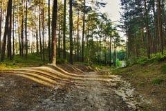 Route vide dans la forêt de pin de soirée avec les derniers rayons du soleil dans le kraj de Machuv de secteur de touristes dans  Photographie stock