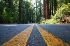 Route vide dans la forêt géante de séquoia photos libres de droits
