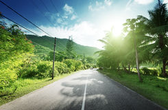 Route vide dans la jungle Photographie stock