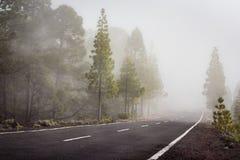 Route vide dans le paysage brumeux de forêt - Photo stock