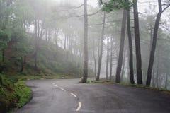 Routes d'enroulement de forêt de pin de l'Himalaya, Inde Photographie stock libre de droits