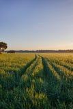 Routes dans les domaines de blé dans la forêt images libres de droits