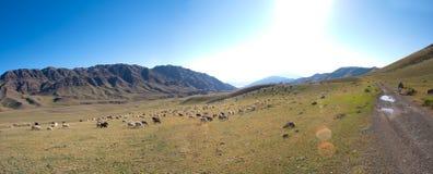Routes de Panarama et prairies et animaux Photo stock