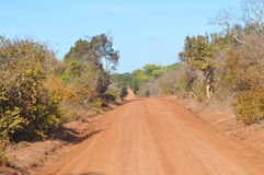 Routes - faune Santuary de Yala Photographie stock libre de droits