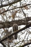 Rov- fågel som sitter på ett träd royaltyfria bilder