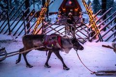 Rovaniemi - 16. Dezember 2017: Touristen, die Rene in Sant reiten Lizenzfreie Stockfotos