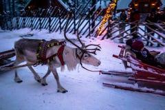 Rovaniemi - 16. Dezember 2017: Touristen, die Rene in Sant reiten Lizenzfreies Stockbild