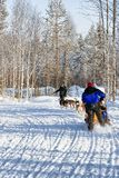 Family riding husky dogs sled in Lapland Finland Stock Photography