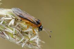 RovaSawfly som sitter på böjelse arkivbilder