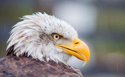 Rovfågelfågeln i det naturligt parkerar av nordliga Spanien royaltyfri fotografi
