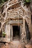 Rovina delle tempie, Angkor Wat, Cambogia Fotografia Stock Libera da Diritti