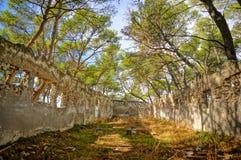 Rovina nel legno Immagini Stock