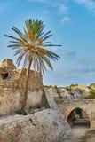 Rovine antiche con la palma sotto cielo blu Immagine Stock