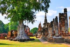 Rovine antiche del tempio buddista di vista scenica e statua di Buddha di Wat Mahathat nel parco storico di Sukhothai, Tailandia Fotografia Stock Libera da Diritti