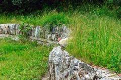 Rovine antiche di una parete di pietra Fotografia Stock Libera da Diritti