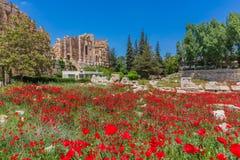 Rovine Baalbek Beeka Libano di Romani del campo del papavero Immagini Stock Libere da Diritti