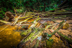 Rovine del fiume Fotografia Stock