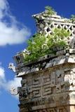 Rovine del Maya Fotografia Stock Libera da Diritti