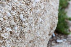Rovine del primo piano antico della parete l'israele Fotografie Stock Libere da Diritti