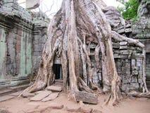 Rovine del tempiale di Bayon, Cambogia. Fotografie Stock Libere da Diritti