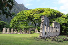 Rovine della casa e l'albero Fotografia Stock