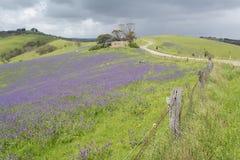 Rovine della fattoria, Rolling Hills, campi di salvezza Jane, Fleuri Immagini Stock