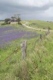 Rovine della fattoria, Rolling Hills, campi di salvezza Jane, Fleuri Immagine Stock Libera da Diritti