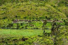 Rovine di inca su una valle verde Immagine Stock