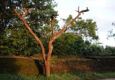 Rovine di re Parakramabahu, il capitale reale in Polonnaruwa, una città di Royal Palace del patrimonio mondiale dell'Unesco di Po Immagine Stock Libera da Diritti