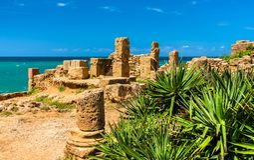 Rovine di Tipasa, un colonia romano in Algeria, Nord Africa immagini stock libere da diritti