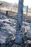 Rovine dopo fuoco Fotografia Stock