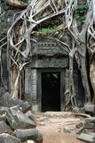Rovine invase di Khmer Fotografia Stock