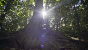 Rovine maya in Palenque, il Chiapas, Messico stock footage