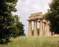 Rovine a Paestum, Italia Fotografie Stock