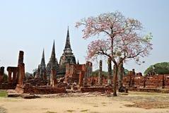 Rovine tailandesi antiche del tempiale con l'albero Fotografie Stock