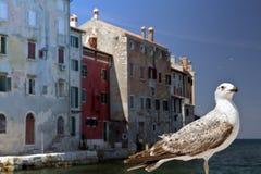 Rovinj Croatia y gaviota Fotografía de archivo libre de regalías