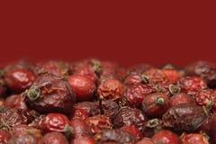 Rovo rosso Immagini Stock