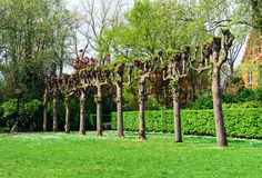 Row of aligned branchless trees in green park Stock Photo