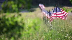 Row of American Flags Blowing in the Breeze stock footage