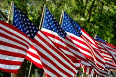 American flags. Row of American Flags on a cemetery ally on Memorial Day royalty free stock photo