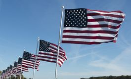 Row of American flags flapping in the wind. On clear day with blue sky`s stock photography