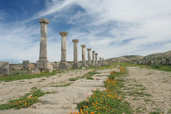 Row of ancient roman columns Royalty Free Stock Images