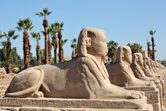 Row of ancient sphinxes Royalty Free Stock Images