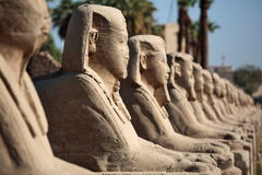 Row of ancient sphinxes Stock Photos