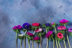 Anemones flowers on stone background Stock Photography