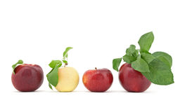 Row of apples with leaves on white background. Row of ripe juicy apples with green leaves, isolated on white background Stock Photos