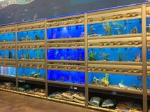Row of Aquarium for sale at pet store Stock Photography