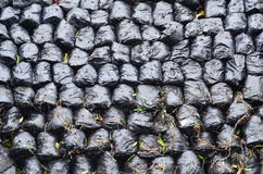 Row of ashed bag Royalty Free Stock Images