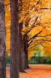 Row of autumn trees Royalty Free Stock Photography